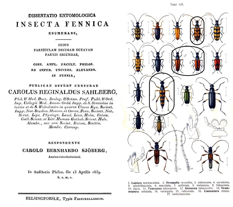 Sjöbergin väitöskirjan 1839 kansilehti ja kovakuoriastaulu 3 lajia ympyröitynä
